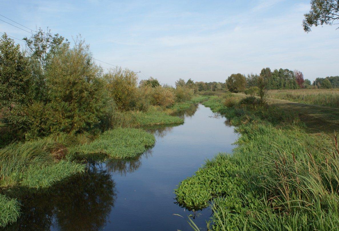 Rzeka Gowienica