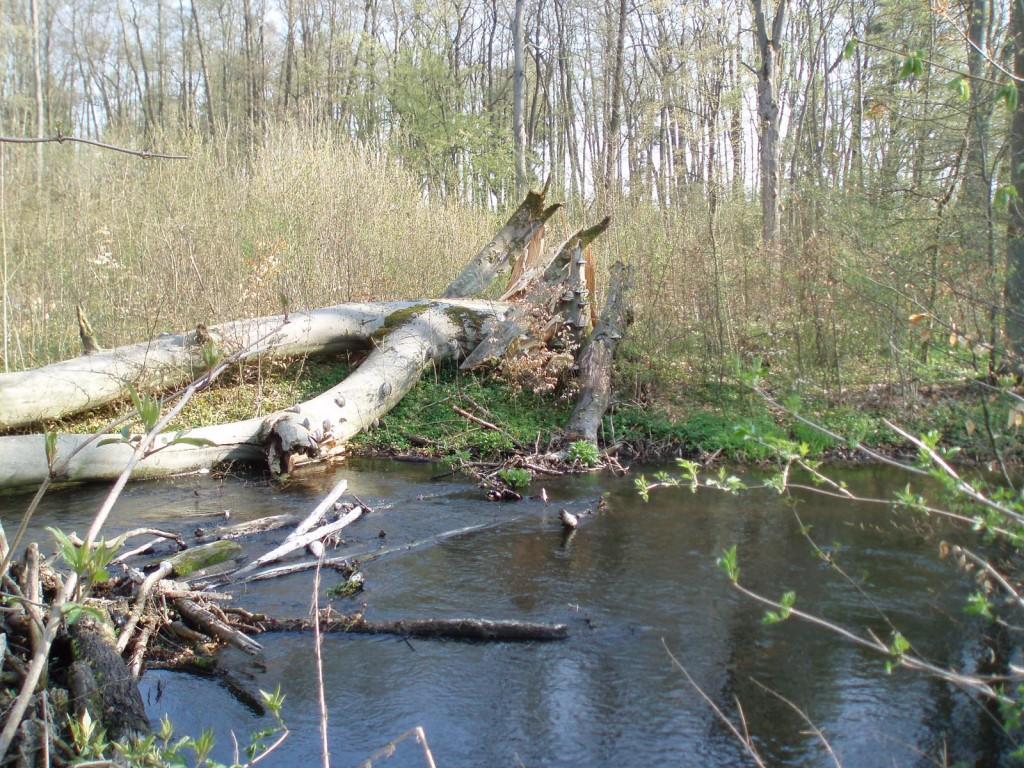 Rzeka Krąpiel