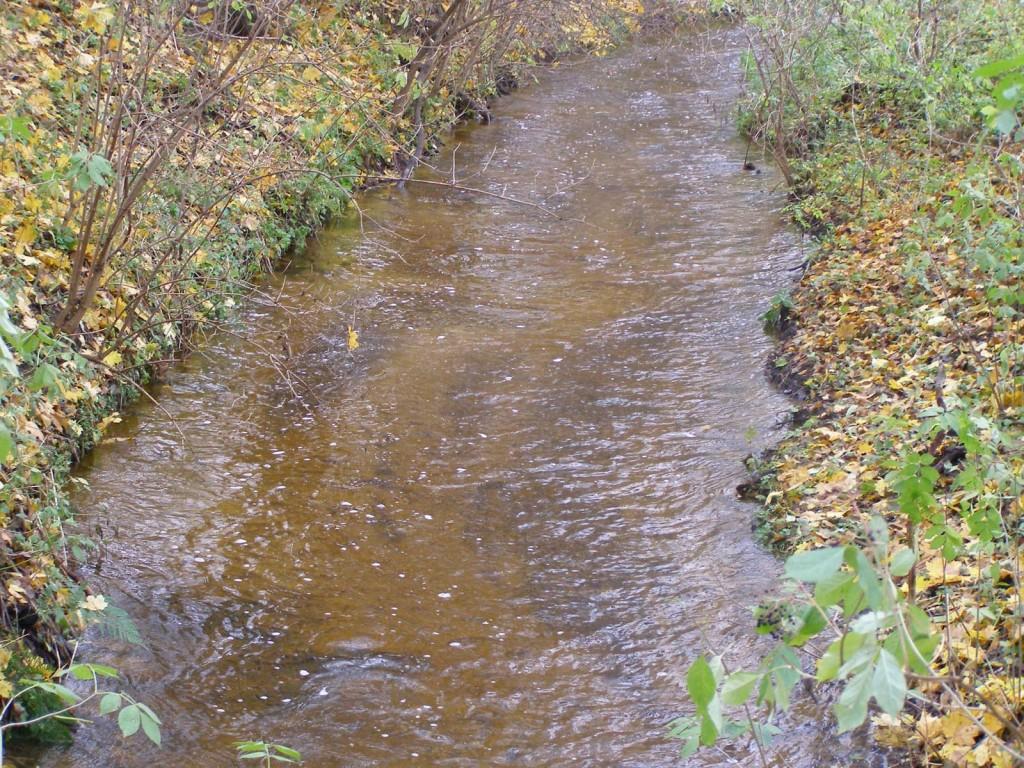 Rzeka Wisniówka
