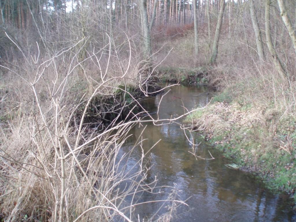 Rzeka Reczyca